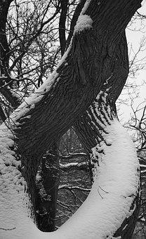 Tree, Snow, Park, Winter, Nature, Cold, White