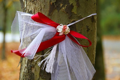 Band, Tree, Wedding, Autumn, Loop, Red, White, Nature