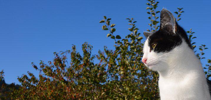 Cat, Pet, Black And White Cat, Young Cat, Animal