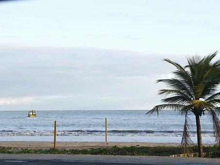 Beach, Sol, Coconut Tree