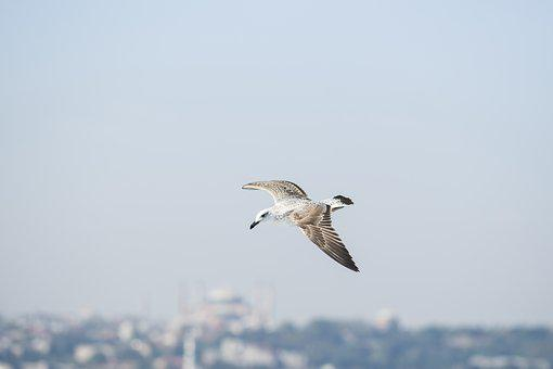 Seagull, Fly, Bird, Freedom, Birds, Sky, Gulls, Day