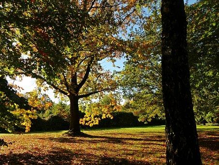 Autumn, October, Forest, Golden October, Golden Autumn