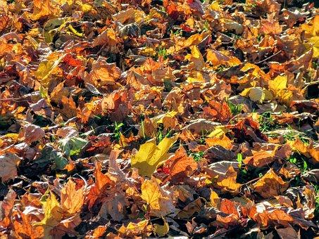 Autumn, Late Summer, Leaves, Nature, Fall Foliage, Leaf