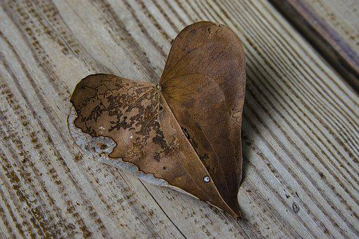 Heart, Leaf, Sweetheart, Autumn, Leaves, Heart Shaped