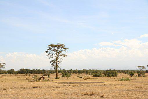 Tree, Savanna, Nature, Africa, Travel, Landscape
