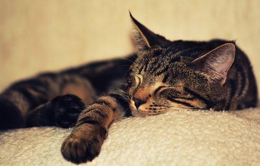 Kitten, Cat, Pet, Animal, Kitty, Domestic, Fur