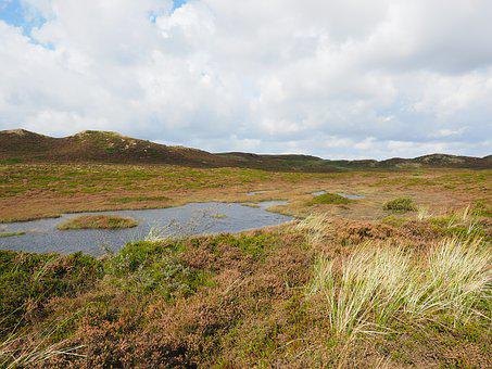 Sylt, Heathland, Dunes, Retama, Peat Bog, Heather