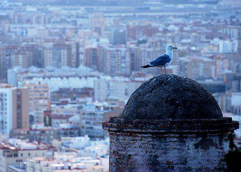 Bird, Animal, Wild, Gull, Seagull, View, Malaga