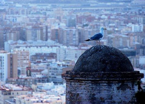 Bird, Animal, Wild, Gull, Seagull, View, Malaga