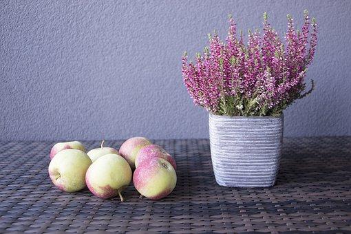 Apple, Autumn, Flowers, Rustic, Harvest, Food, Season