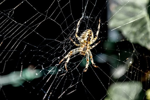 Spider, Web, Cobweb, Close Up, Nature, Arachnid