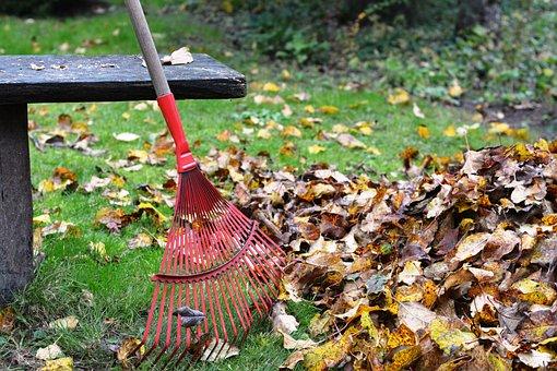 Rake, Rob, Raking, Foliage, Autumn, Rake The Leaves