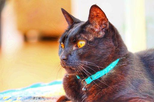 Cat, Animal, Mammal, Black, Cute, Pet, Kitten, Domestic