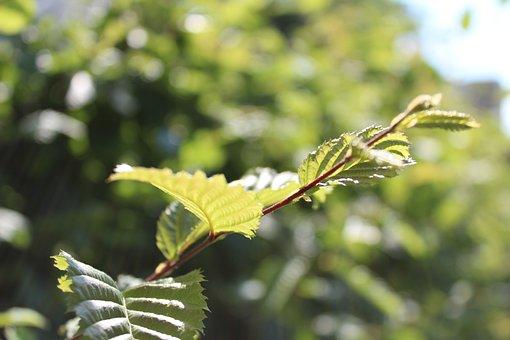 Garden, Green, Nature, Plant, Summer, Hedge, Bush