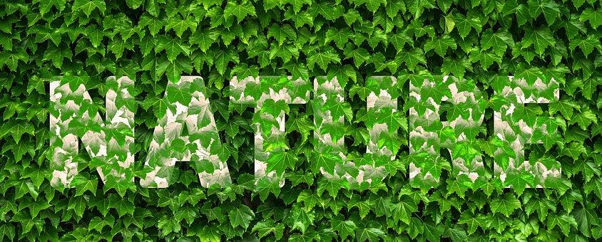 Nature, Ivy, Vine, Leaf, Green, Plant, Covered, Font