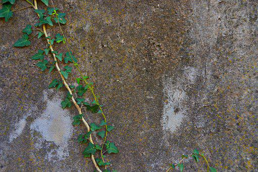 Ivy, Wall, Texture Wall, Green Leaves, Background