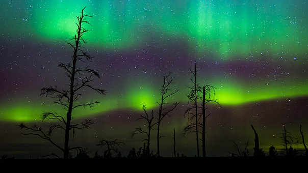Night, Norther Lights, Aurora, Sky, Trees, Stars