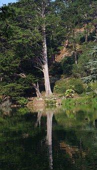 Tree, Park, Mirroring, Water, Sunshine, Green, Nature