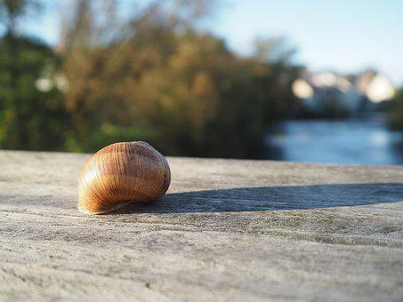 Snail, Shell, Snail Shell, Snail Shells, Close, Spiral