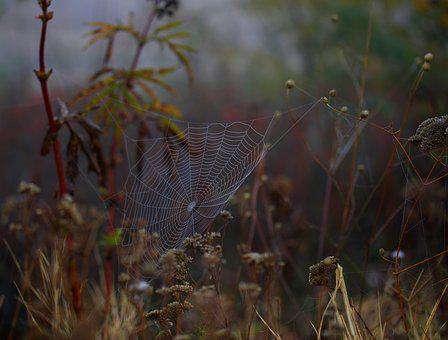 Spider Web, Wet, Hooked, Place, Dew, Drops, Nature
