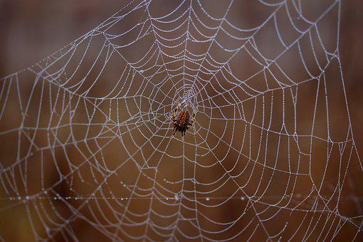 Spider, Spider Web, Wet, Hooked, Place, Dew, Drops