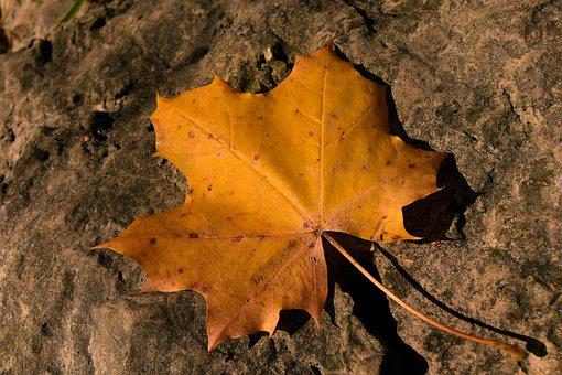Leaf, Autumn, Maple Leaf, Transient, Stone, Sun