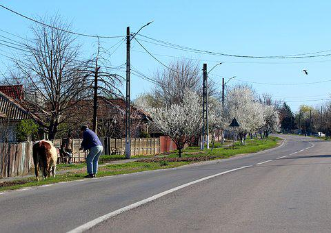 Street, Village, T, Cow