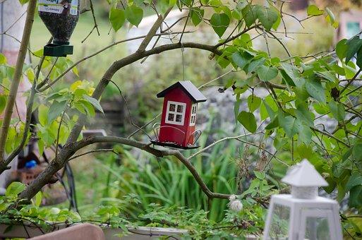 The Bird Feeder, Feeding The Birds, Garden