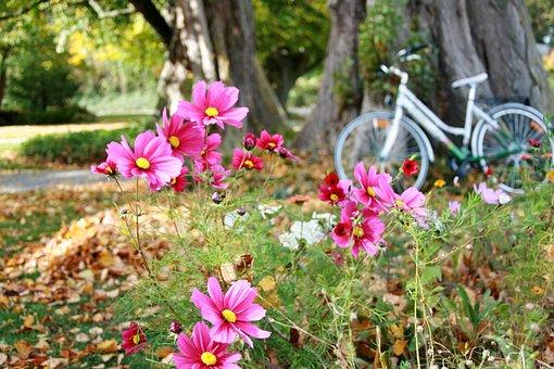 Anemones, Autumn Flowers, Autumn, The Delicacy, Bike