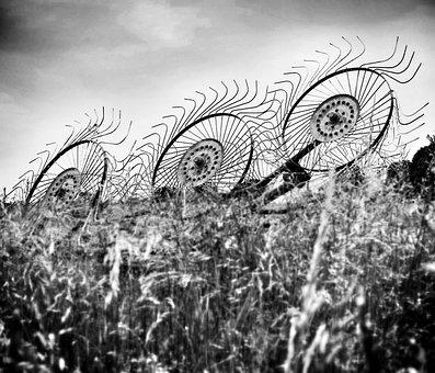 Hay, Black And White, Black, White, Rural, Farm