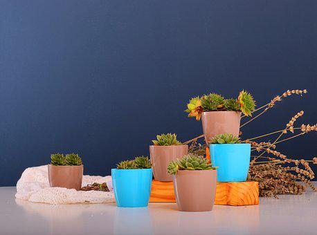 Stars, Flowerpots, Plant, Green, Nature, Decoration