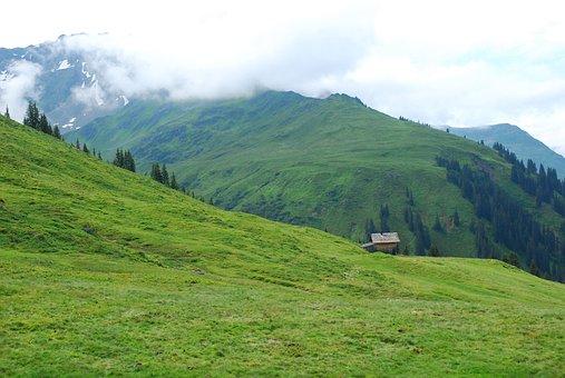 Mountain Meadow, Meadow, Alpine Marmot, Flowers