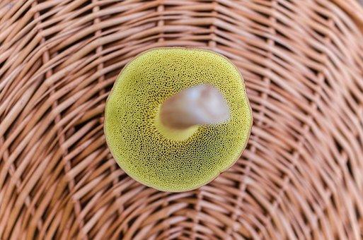 Basket, Food, Forest, Mushroom, Fungus, Autumn, Natural