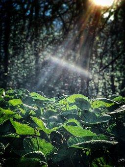 Sunlight, Forest, Nature, Light, Landscape, Sun, Sunny