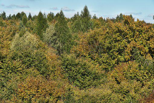 Autumn Forest, Indian Summer, Treetop, Canopy, Emerge