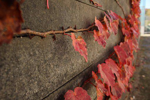 Autumn, Ivy, Damme, Fence, The Vine, Wall, Stone Wall