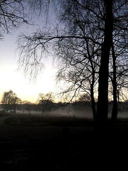 Woods, Misty, Nature, Landscape, Park, Outdoors