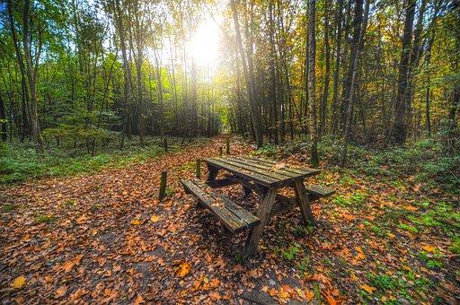 Bench, Forest, Picnic, Nature, Park, Landscape, Tree