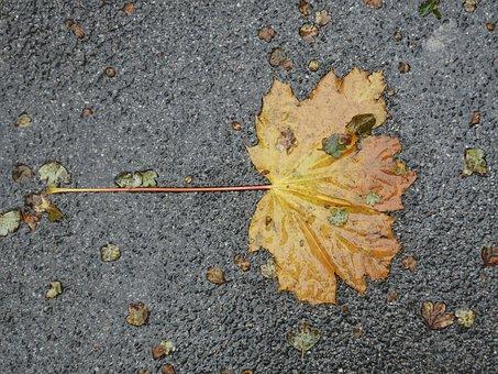 Leaf, Asphalt, Wet, Autumn, Fallen, Discolored