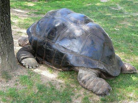 Turtle, Tortoise, Nature, Animal, Shell, Reptile