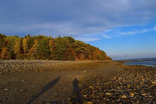 Sunset, Shore, Trees, Light, Rocks, Ocean, Maine