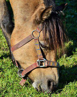 Horse, Pony, Ride, Reiter, Equestrian, Coupling, Animal