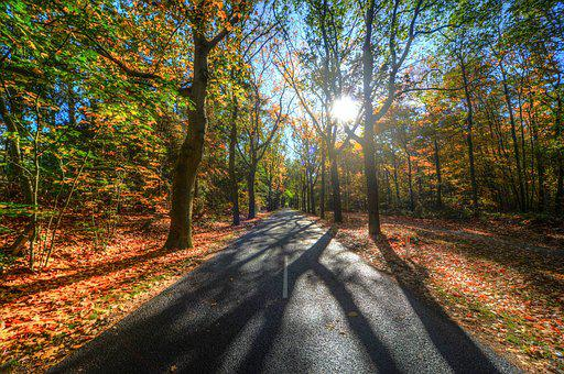 Forest, Sun, Shadow, Green, Yellow, Nature, Landscape