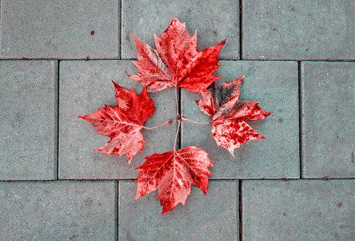 Leaves, Autumn Leaves, Pavement, Stone, Tile, Four, 4