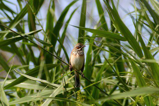 Animal, Grass, Green, Bird, Wild Birds, Little Bird