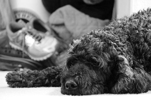 Dog, Sad, Pout, Pouting, Sad Dog, Animal, Cute, Fuzzy