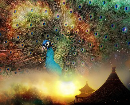 Peacock, China, East, Asian, Asia, Culture, Traditional