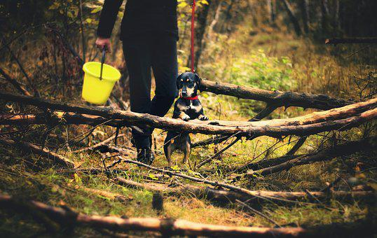Dog, Mushrooms, Spacer, Forest, Wandering, Autumn
