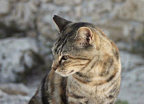 Cat, Head, Portrait, Cat Face, Close Up, View