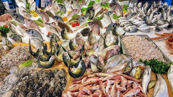 Fish, Sea, Boat, Fishing, Network, Fishermen, Boats